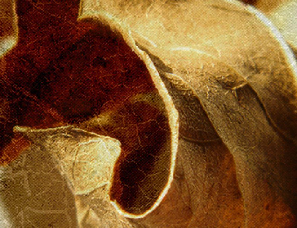 Fine Art Texture Package – 4 High Resolution Files